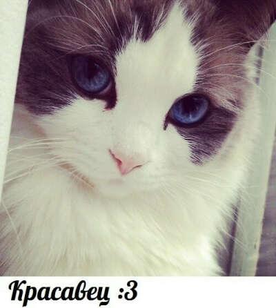 Хочу Котика