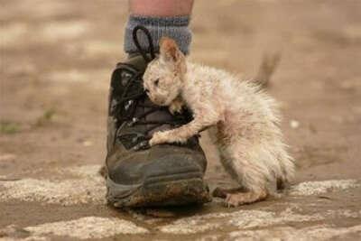 закон о защите прав животных