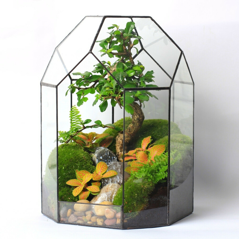 Флорариум Тропический лес