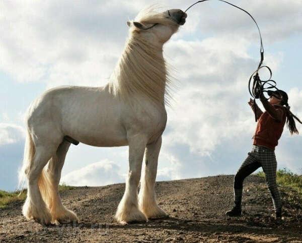 хочу свою лошадь