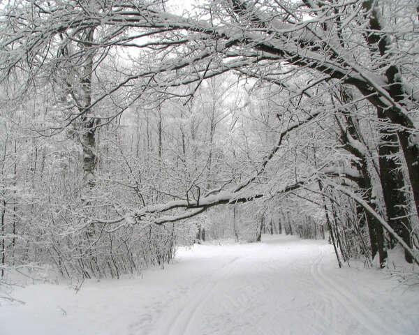 В зимний лес