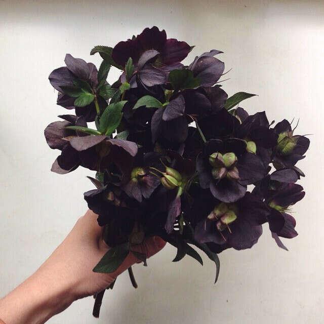 Темные цветы
