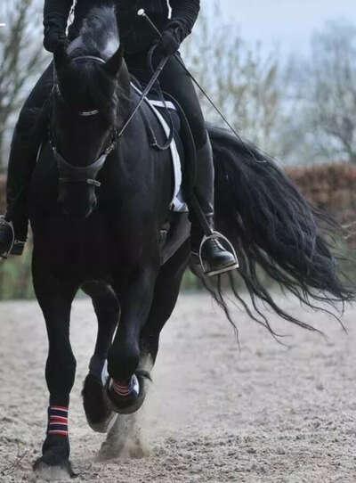 попробовать себя в конном спорте