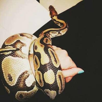 Завести змею