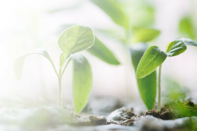 Видеокурс «Как вырастить душистые  травы на подоконнике»