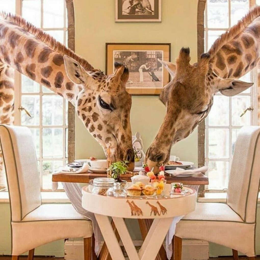 Пообедать в Giraffe Manor