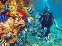 нырнуть под воду с аквалангом