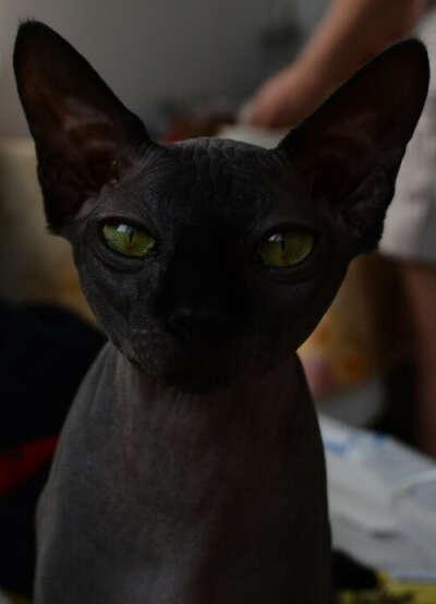 Черный Сфинкс