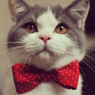 Хочу быть котом^^