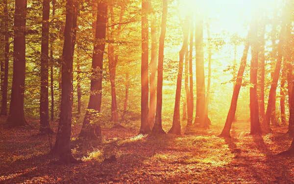 Выбраться в осенний лес