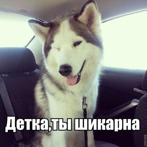 собачку