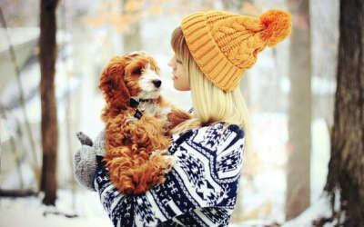 сходить на фотосессию с моей собакой