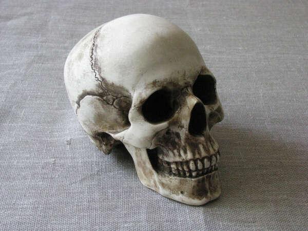 Гипсовый череп