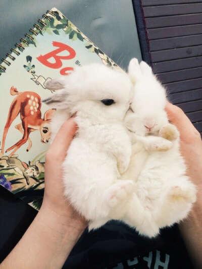 Хочу декоративного кролика