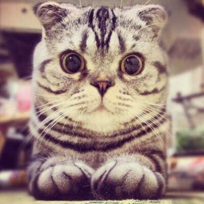Такую кошку