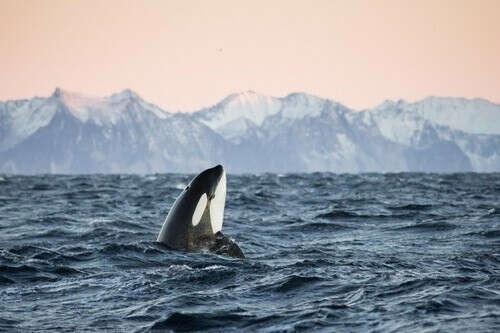 Увидеть китов