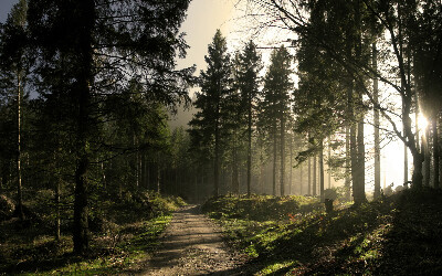 Лесная прогулка