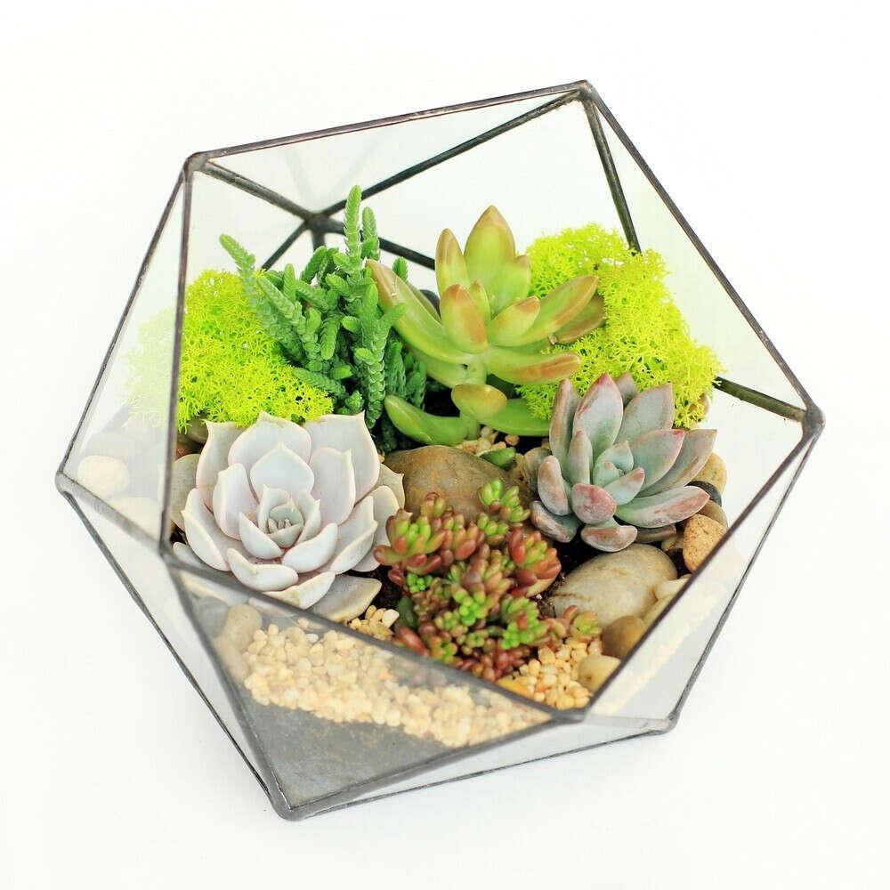 Флорариум Икосаэдр мини