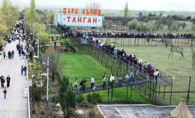 Посетить парк львов Тайган