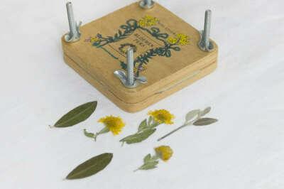 Пресс для гербария
