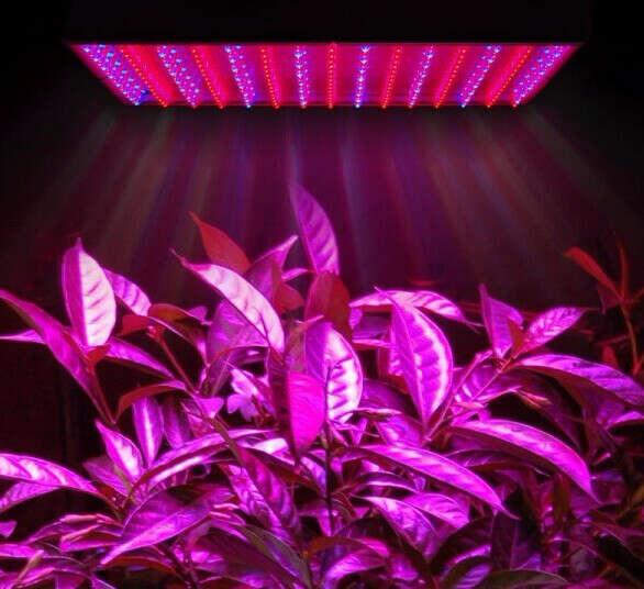 Фитолампы: лампы для комнатных растений и подсветки рассады