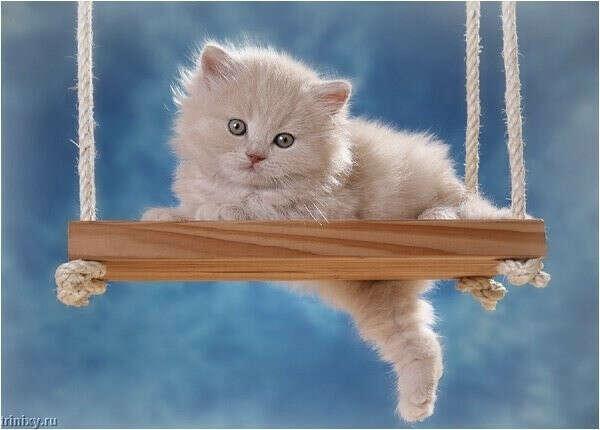 маленького пушистого котёнка