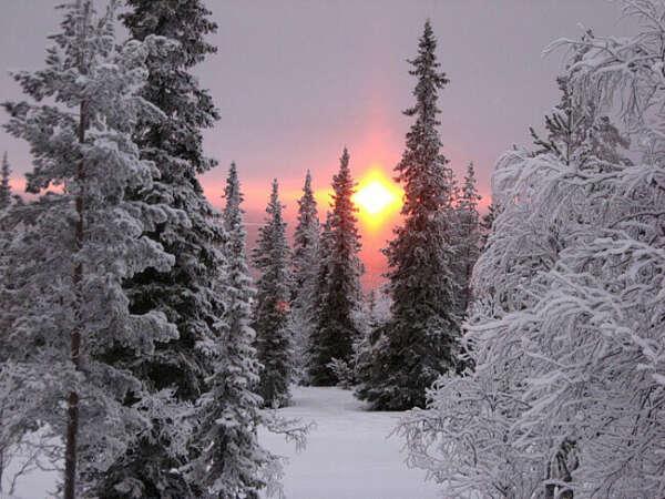 Волшебную зиму