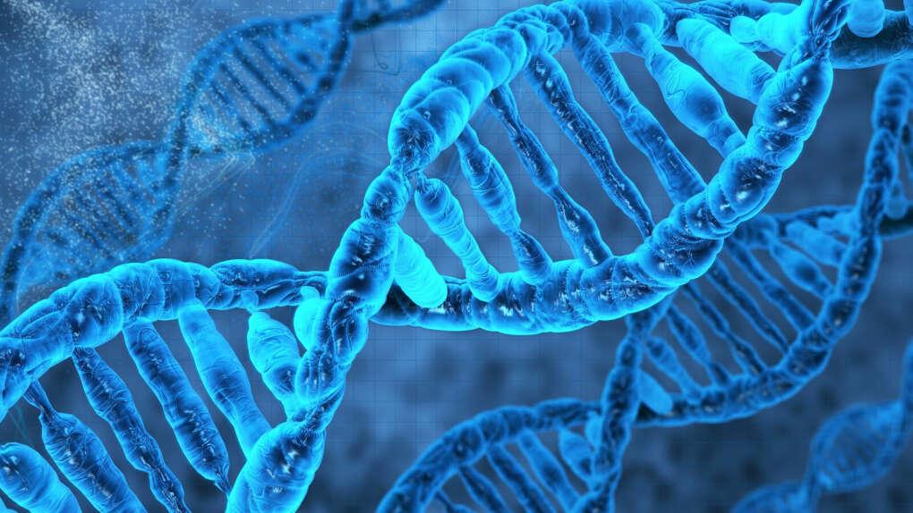 Тест ДНК на национальность и происхождение рода
