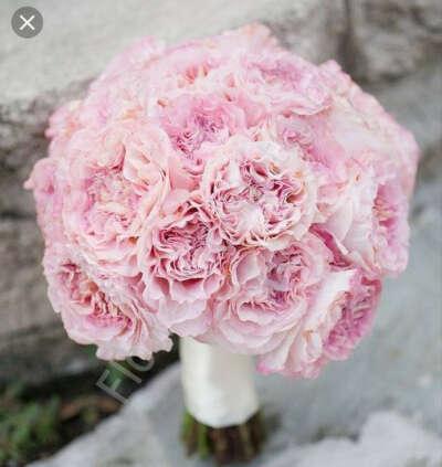 Розовые и/или сиреневые гвоздики