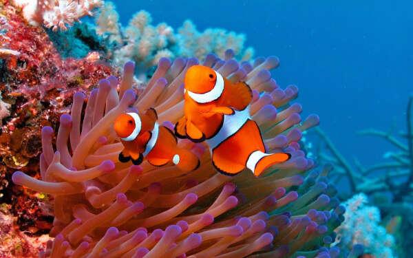Увидеть Большой Барьерный риф