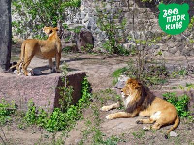 Сходить в Киевский зоопарк