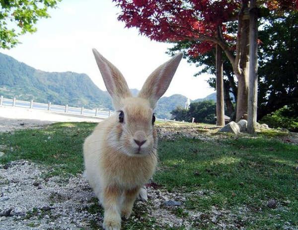 Посетить остров кроликов Окуносима в Японии