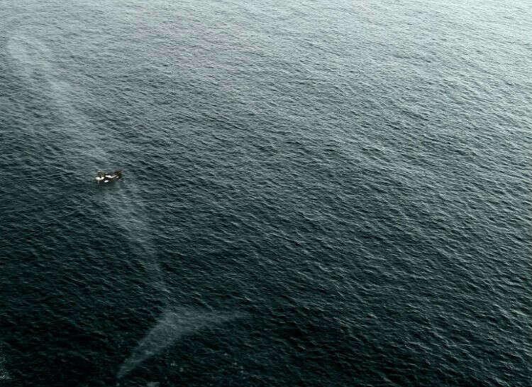 Проплыть рядом с синим китом