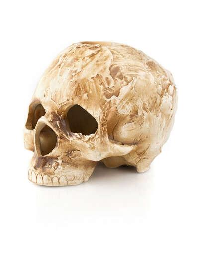 Аромалампа череп керамический (натуральной величины)