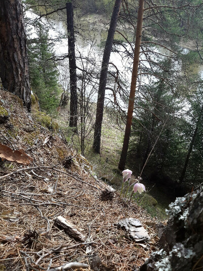 Чусовские скалы