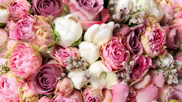 Цветы много и всегда