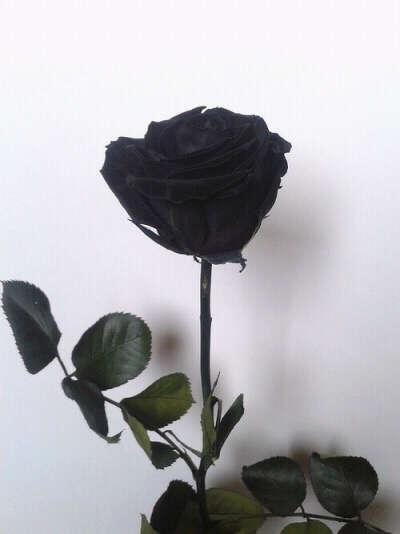 Черную розу.