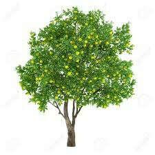 Посадить деревья