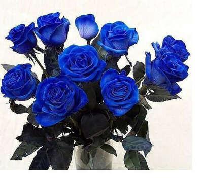 Настоящие синие розы... *_*
