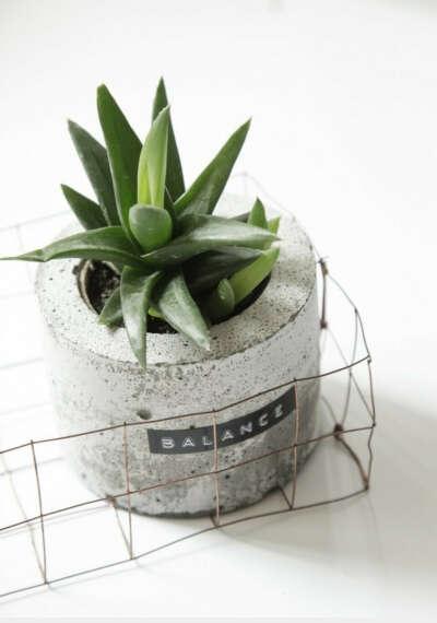 растения в бетонных горшках
