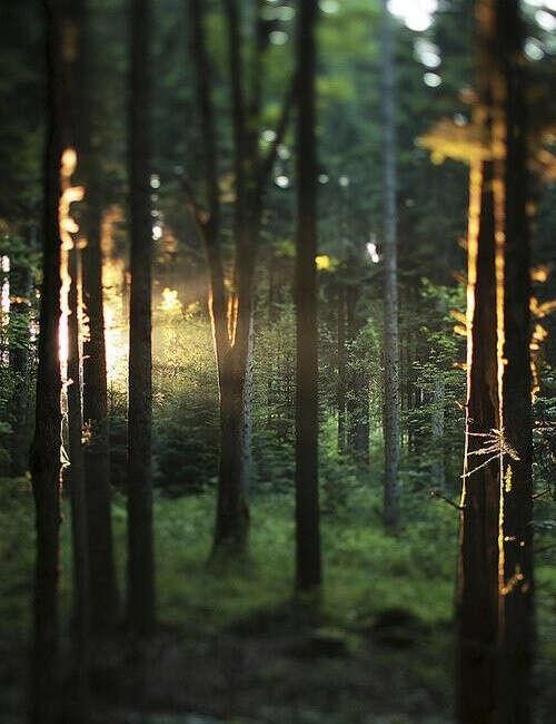 Прогулка по летнему лесу