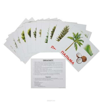 Вундеркинд с пеленок Обучающие карточки Деревья