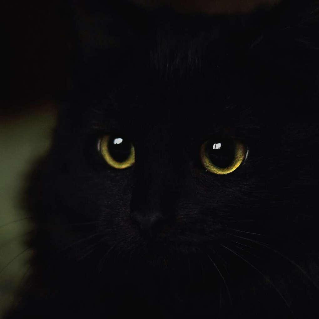 Завести черного кота с зелеными глазами